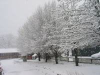 Winter-Trees-Hidden-Valley-Motel